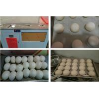 China Steamed bun forming machine,round dough ball forming machine on sale
