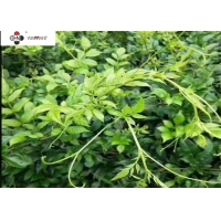 Water Soluble Antitumor Vine Tea Extract Powder Manufactures