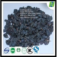 Free sample with 10 years experience factory provide Black Currants Extract Manufactures