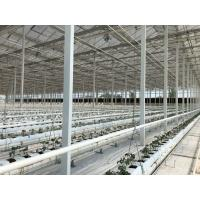 China Large Size Commercial Hydroponic Greenhouse With Soilless Cultivation on sale