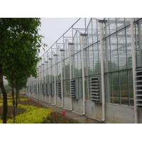 4000mm section Multi - span Commercial glass greenhouses for agriculture Manufactures