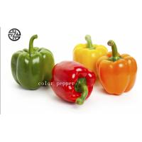Anti - Cancer Multi Colored Peppers High Nutritional And Edible Value Manufactures