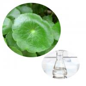 Pure Natural Centella Asiatica Gotu Kola Liquid Improving Blood Circulation Manufactures