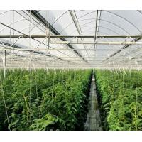 High Elasticity Polyethylene Film Greenhouse For Vegetables / Cucumber / Tomato Manufactures