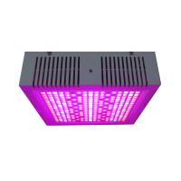 Osunby 600W Dimmable LED Grow Lights Full Spectrum for Indoor Greenhouse Plants Manufactures