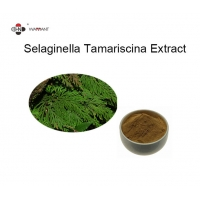 6% Amentoflavone Standardized Herbal Extracts Manufactures