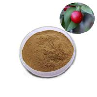 China Root Part Plant Extract Powder Organic Butcher'S Broom Root Extract 24 Months Shelf Life on sale