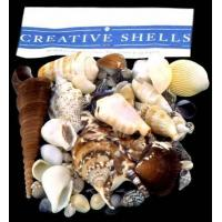 China Seashell Packs on sale