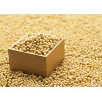 Quality Organic Soybean Extract Powder 40% Isoflavones to improve brain function and for sale