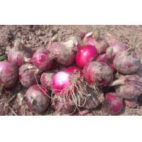 Red Natural Fresh Onion Anti-Cholesterol For Grilling And Char-Broiling, Flat spherical or spherical Manufactures