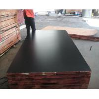 1220*2440, 1250*2500mm, 1500*3000mm MARINE PLYWOOD & hot selling film faced plywood Manufactures