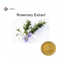 Fresh Benefits Rosemary Leaf Extract Powder Solvent Extraction For Skin Care Manufactures