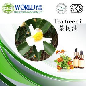 100% pure organic Tea Tree Oil,Nature tea tree essential oil Manufactures