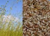 Flaxseed Hull Extract 20%~80% Flax Lignans SDG Manufactures