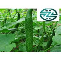 Green Cucumber Cucumis Sativus , Delicious Cucumis Sativus Fruit Manufactures