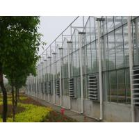 single film / inflation film / glass Commercial Venlo greenhouse , 9600mm span Manufactures