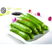 Delicious Cucumber Cucumis Sativus , Miniature Cucumber Fruit Vegetable Manufactures