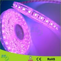 Yellow / Red / Green Waterproof Led Rope Lights 120leds/M Led Strips
