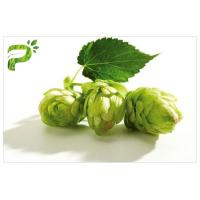 Flower Powdered Herbal Extracts Broad Spectrum Beer Hops Xanthohumol 98% CAS 6754 58 1 Manufactures