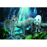 Pet / Pvc / PP Wolf Animal Photos Lenticular 3d Posters For Store Eco - Friendly Manufactures