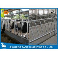 Individually Feeding Dairy Cow Headlock Stockade Plate Length 8 Meter Manufactures