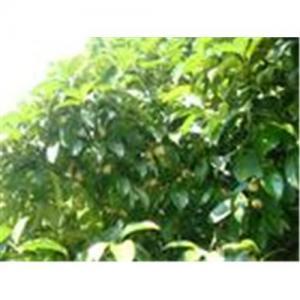 China Mangosteen P.E., alfa-mangostin, Aloe vera gel power, aloin on sale