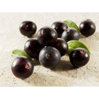 Food Additives Freeze-Dried Acai Berry Extract / Acai Berry Extract Powder