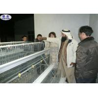 China Strong Chick Rearing Cage 120 Birds Capacity In Kenya SGS Certification on sale