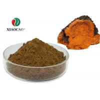 Pharmaceutical Organic Herbal Extracts Chaga Mushroom Powder Lions Mane Manufactures