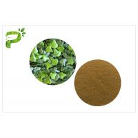 China Cough Treat Pure Herbal Supplements Ivy Leaf Extract Hedera Helix Hederacoside 10% on sale