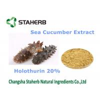 Sea Cucumber Extract Natural Cosmetic Ingredients Holothurin 20% For Cosmetic Manufactures