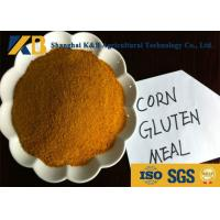 Customized Specification Non Gmo Protein Powder Natural Protein Supplements Manufactures