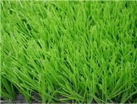 China Sports Grass WF-S10500 Light wholesale