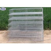 Metal Quail Breeding Cages 15 Years Lifetime At Least 3 Years Warranty Manufactures