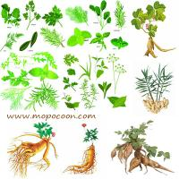 Nettle root extract Manufactures