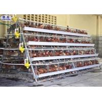 10000 Egg Layer Chicken Cage / Poultry Farm Layer Cage Customized Service Manufactures