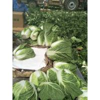 Agricultural Clean Fresh Chinese Cabbage Very Low In Calories 1kg / Per Manufactures