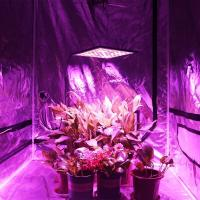 Hydroponic LED Plant Grow Light , 300W Full Spectrum Lamp for Greenhouse Manufactures