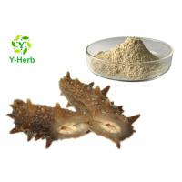 Sea Cucumber Intestinal Protein Peptide Powder Stichopus Japonicus Extract Manufactures