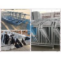 Cow headlock and feed panel for livestock plant Manufactures