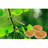 China Pure Ginkgo Herbal Extracts For Cerebral And Microcirculation Improvement on sale