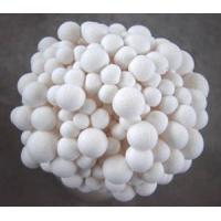 China White Shimeji Mushroom on sale