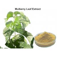 China White Mulberry Leaf Extract Powder , Organic Mulberry Leaf Extract Weight Loss on sale