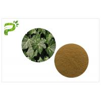 Quality Hedera Helix Hederacoside Plant Extract Powder Ivy Leaf Extract Treat Cough And Cold for sale