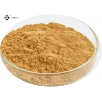 GMP 100% Natural Anti Oxidation Dong Quai Extract Manufactures