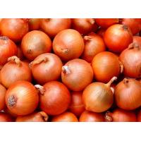 Fresh Red Onion Manufactures