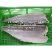 China Frozen Saithe Fillet on sale