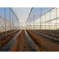 250 Meters Insect Screen Mesh ,100% HDPE Greenhouse Insect Protection Netting Manufactures