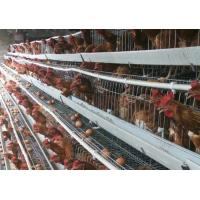 China 4 Tiers 128 Capacity H Type Layer Chicken Cage For Commercial Chicken Farm on sale