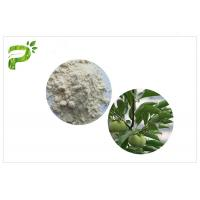 Natural Plant Ursolic Acid Extract , CAS 77 52 1 Persimmon Leaf Powder High Purity Manufactures